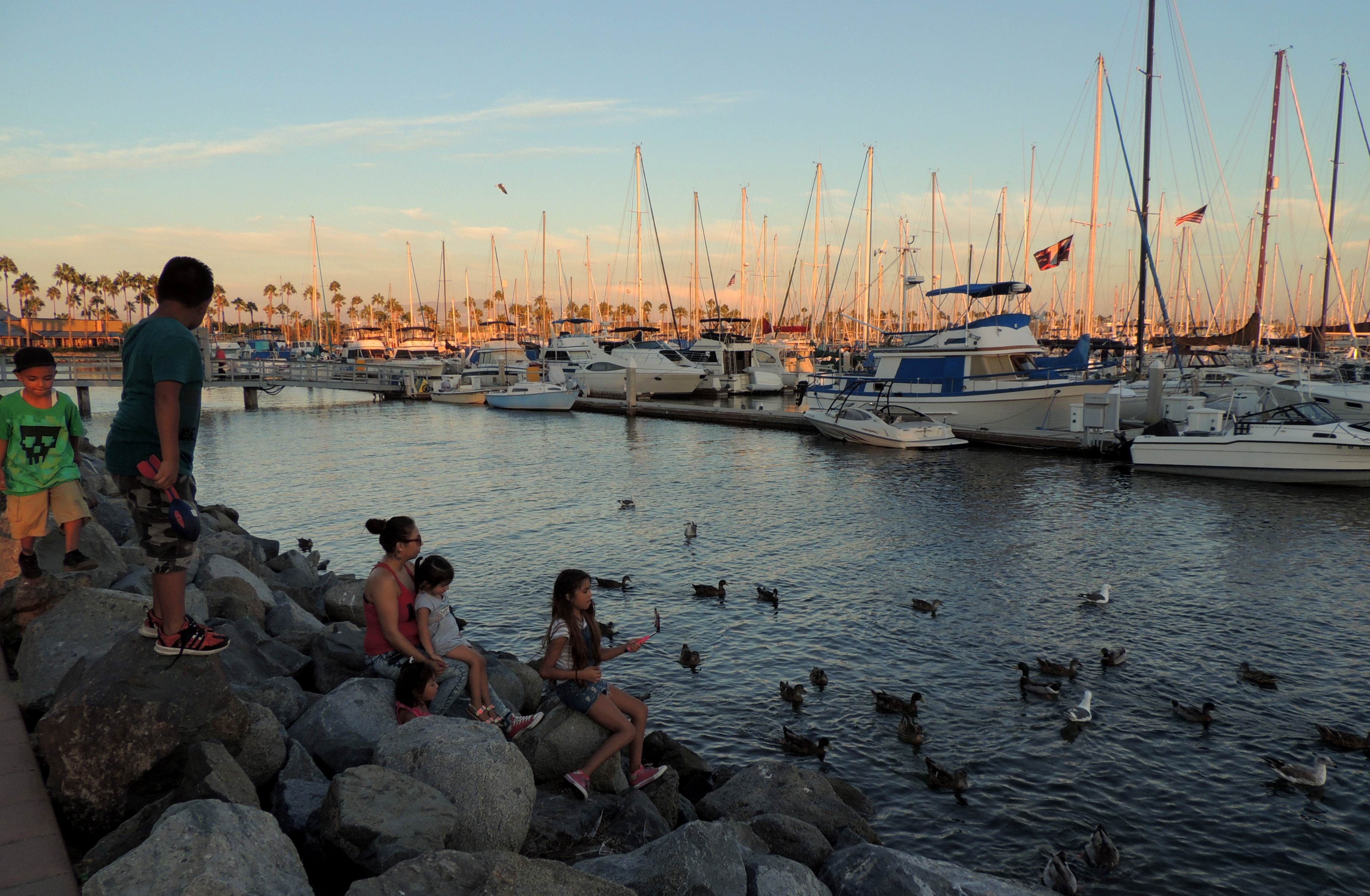 Feeding the gulls and ducks are favorite activities for families and visitors at the J Street Marina in Chula Vista
