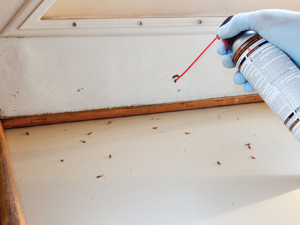 Using a straw applicator to inject termicide foam into holes is a good first step before fumigation.